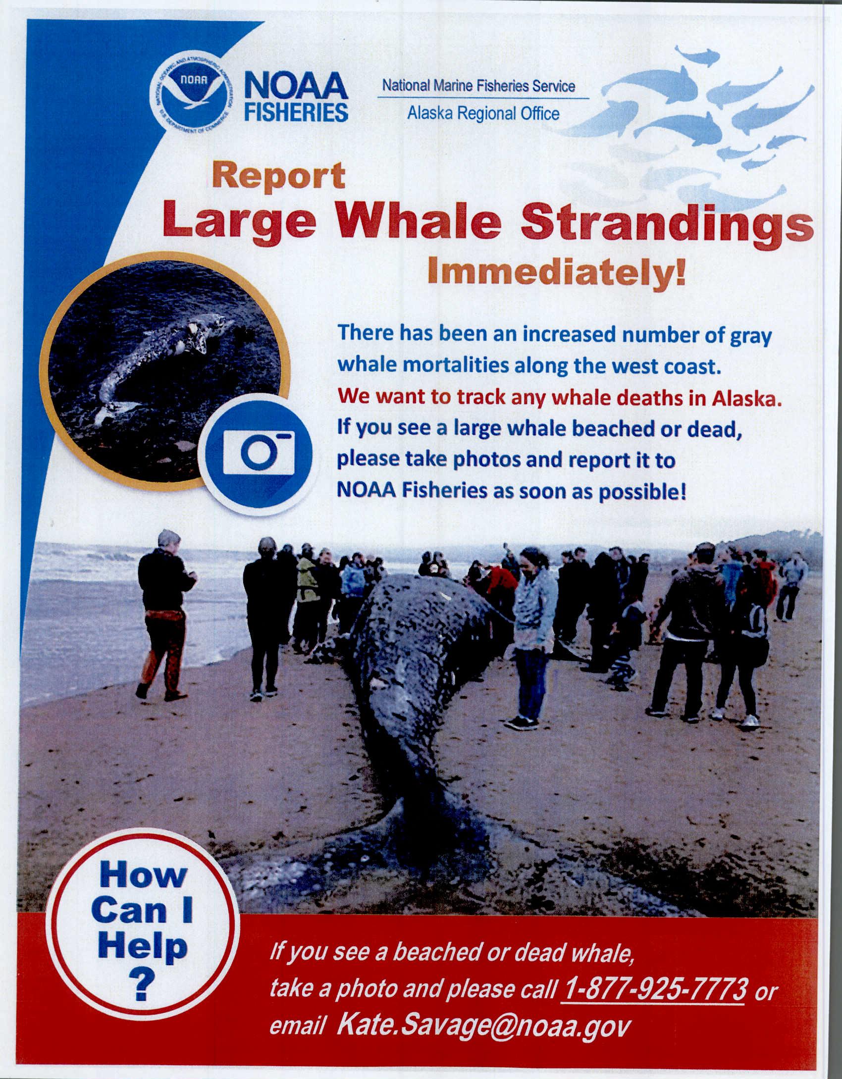 Whale Flier